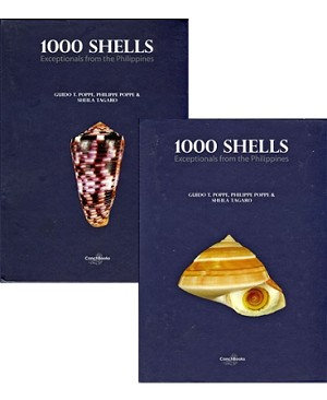 1000 Shells - Exceptionals from the Philippines