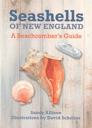 Seashells of New England - A Beachcomber's Guide