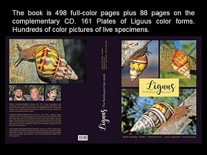 Liguus: The Flamboyant Tree Snails