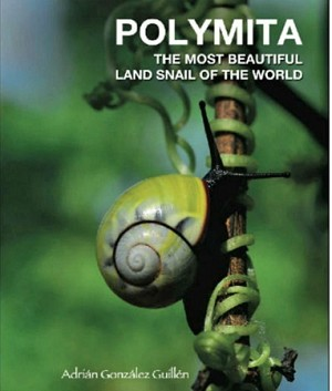 Polymita the Most Beautiful Land Snail of the World